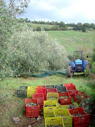 Gefüllte Olivenkörbe