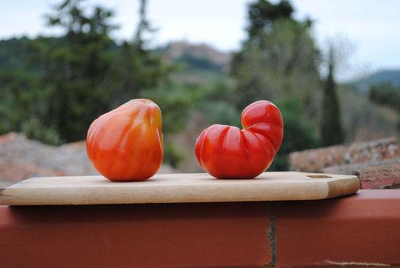 Cuore di bue und Marinda-Tomaten