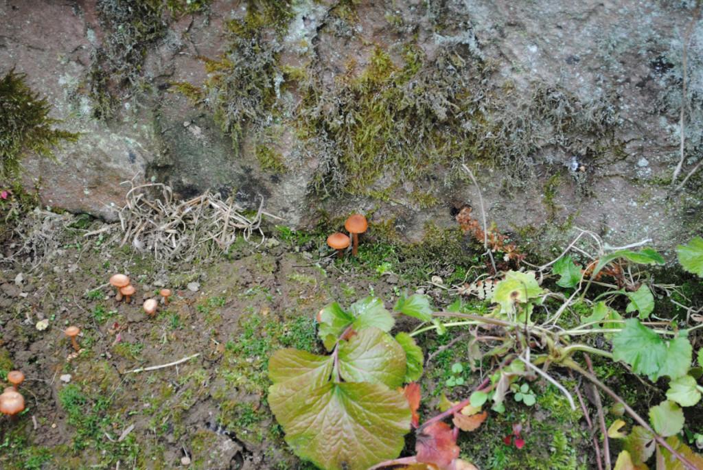 Pilze im Steingarten